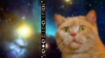 2HP Cat