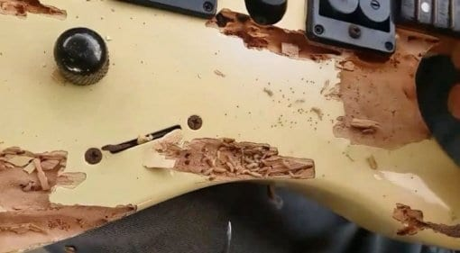 Woodworm Infestation found by Guitar Clinic in Equador